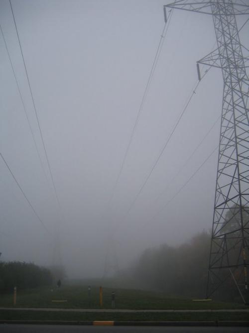 Foggy Finch Hydro Corridor
